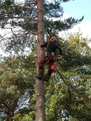 Tree Pruning in Richmond Hill